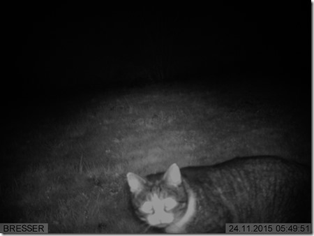 Katze - IMAG0017-1