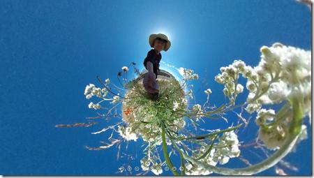 Blume_Kleiner_Planet